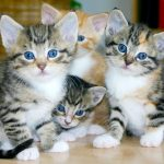 Today Is World Spay Day: Why It Matters