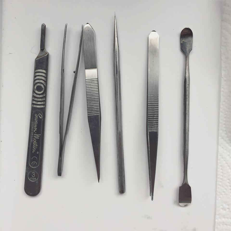 Taxidermy Tools