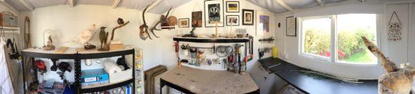 UK taxidermy Workshop