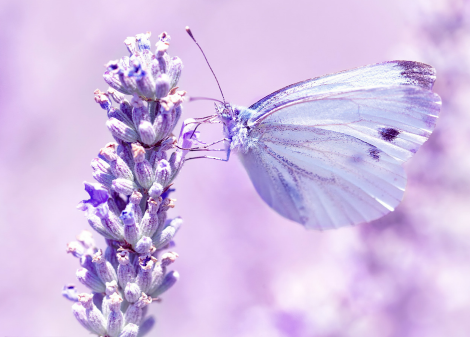 The Benefits of Struggling – the Butterfly Story