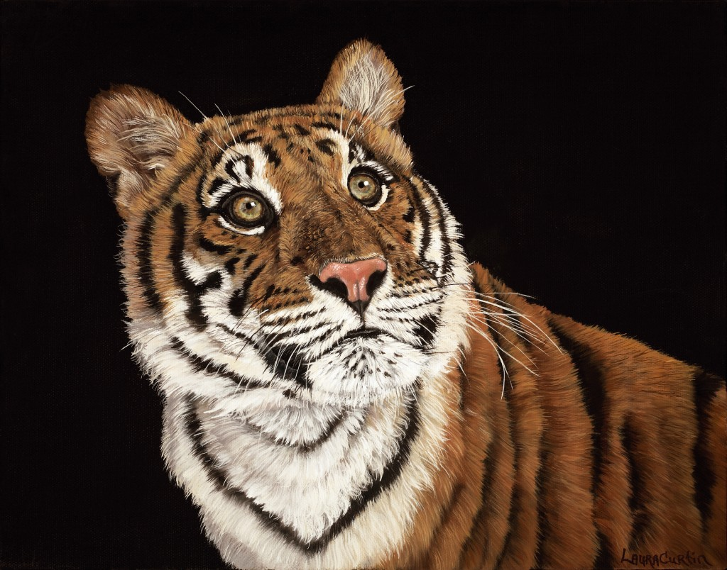 "Final Piece ""Young Tiger"" Wildlife Art by: Laura Curtin"