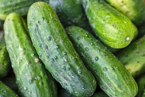 photo of cucumbers