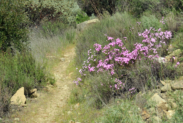 There are numerous trails in the Santa Barbara area suitable for cross country trail running of varying degrees of difficulty.