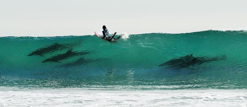 Rincon-Classic-Dolphin-Wave
