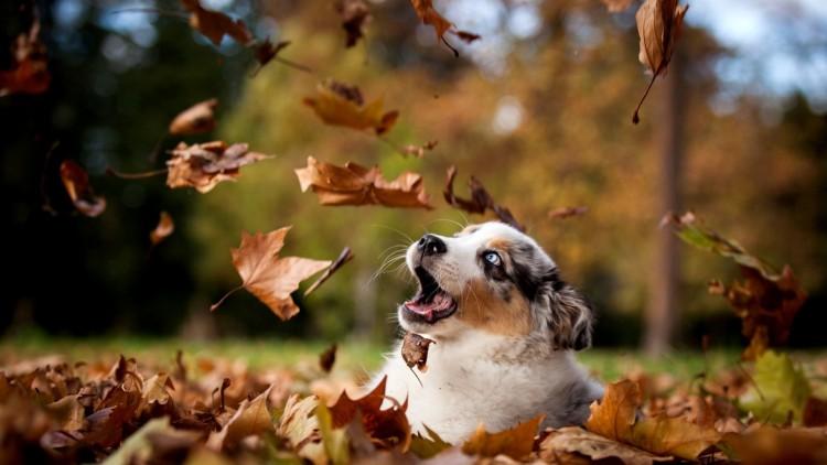 chien-qui-samuse-amour