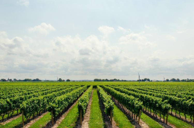 first date a quebec - route des vins