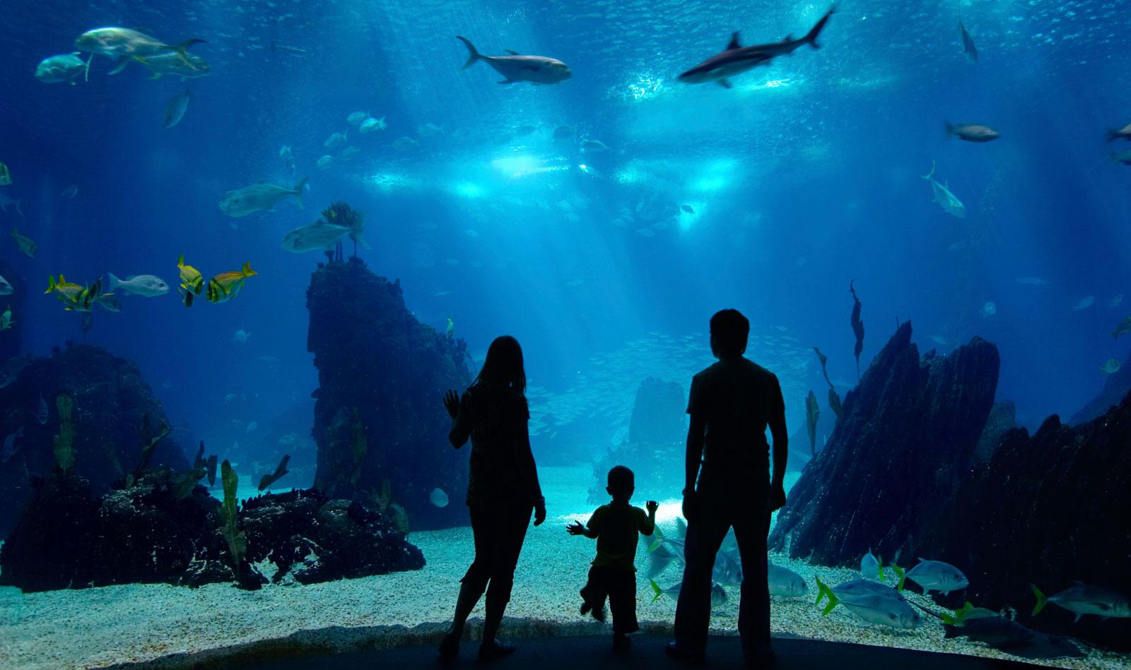 boston-new-england-aquarium-top