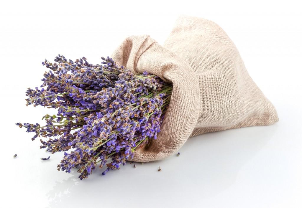 lavande-bouquet