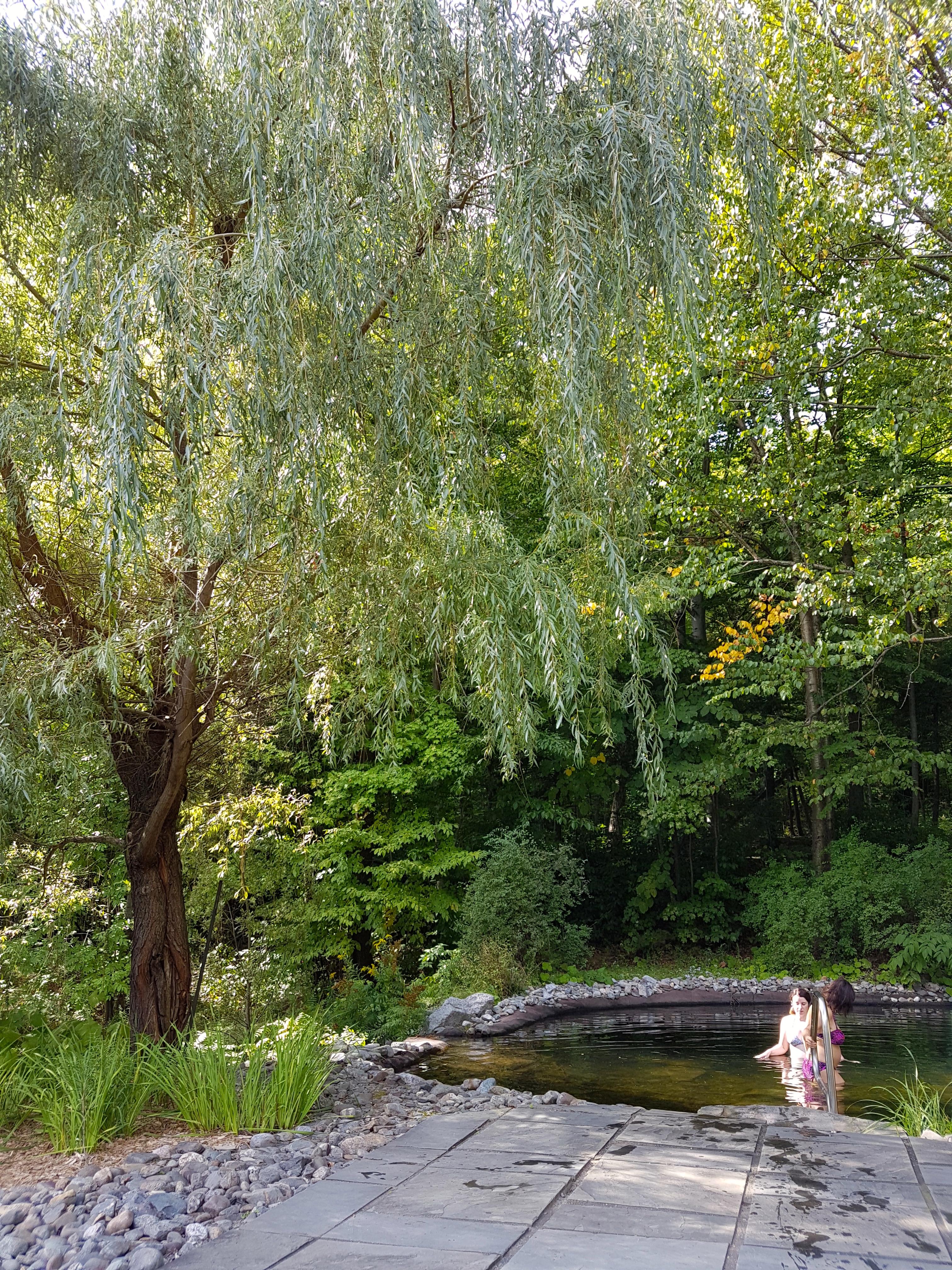 balnea-automne-étang