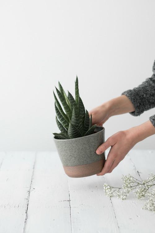 pot_plante_ceramique