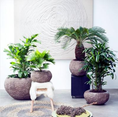 plante 01