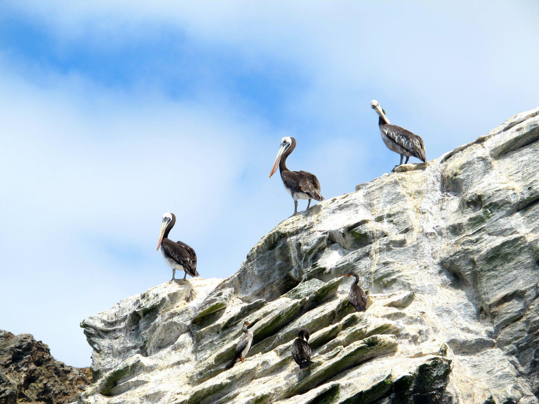 La Réserve Nationale des Pingouins de Humboldt
