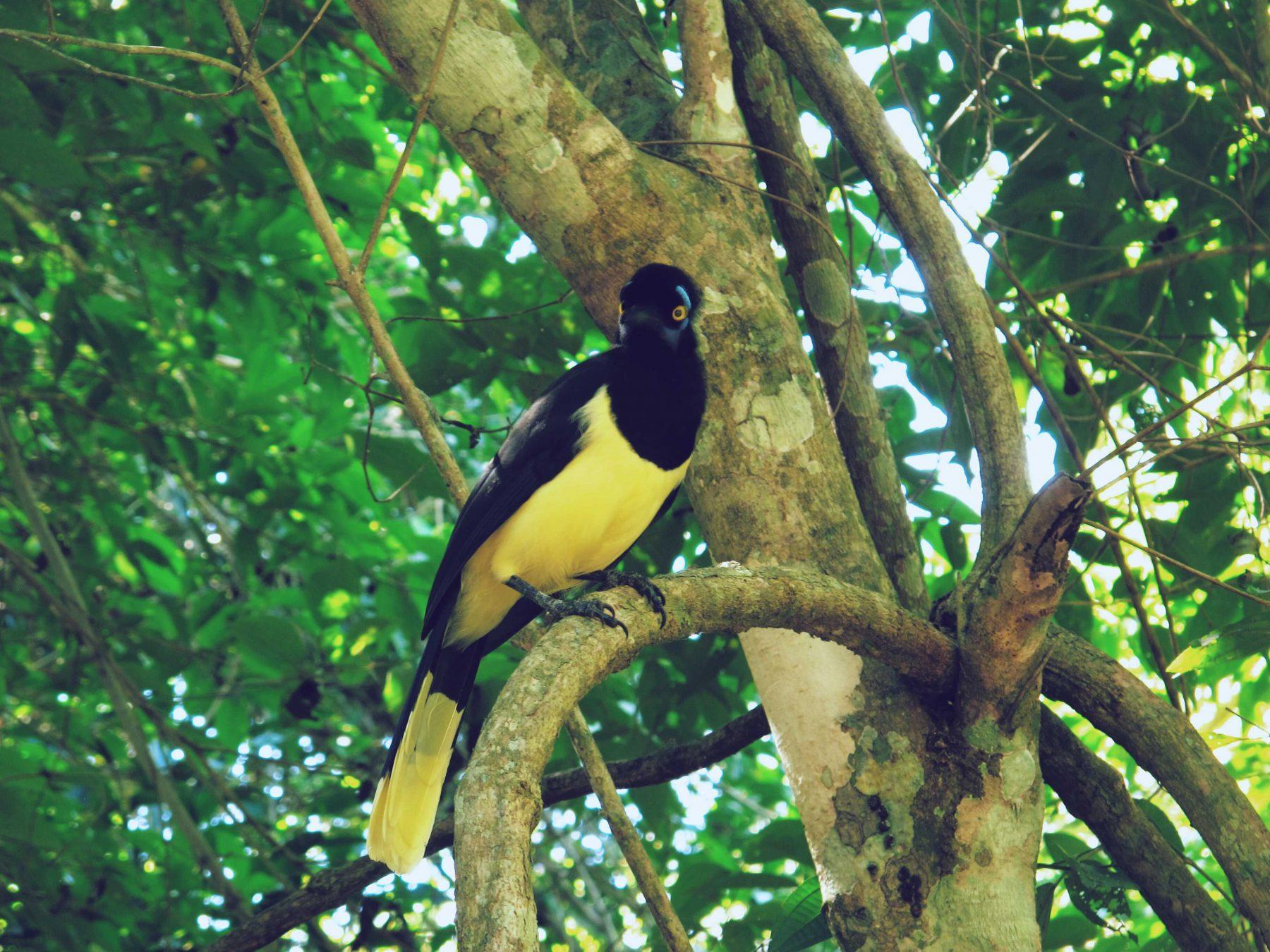 Parc National de Iguazu