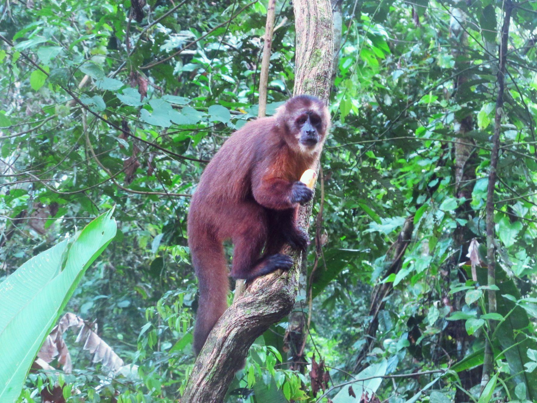 la Isla de los Monos à Puerto Maldonado