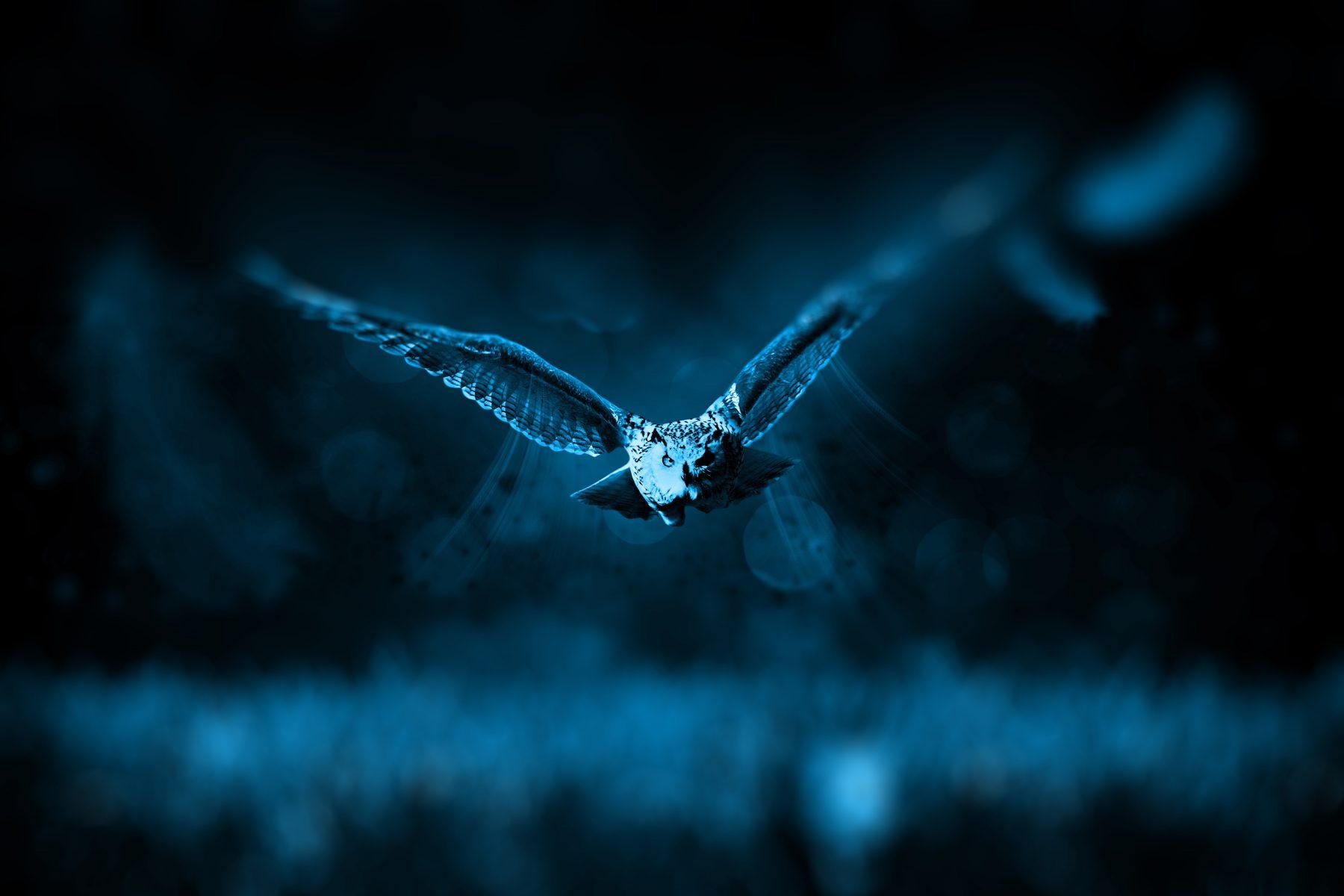 animal-bird-dark-46248