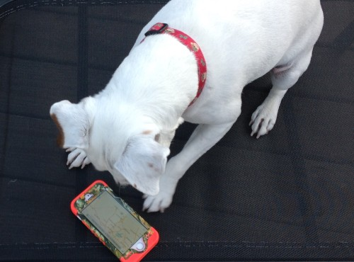 Becoming a GPS for My Dog