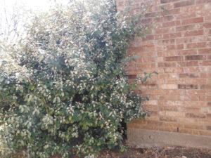 termite bush 1