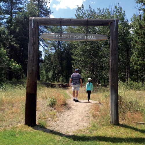 Collins-Pine-Trail