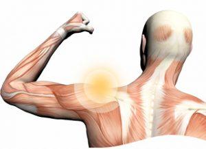 body-shoulder