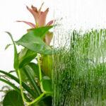 value-plant-rain