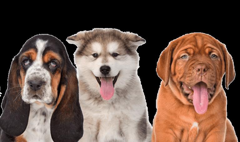 dogs-testimonial