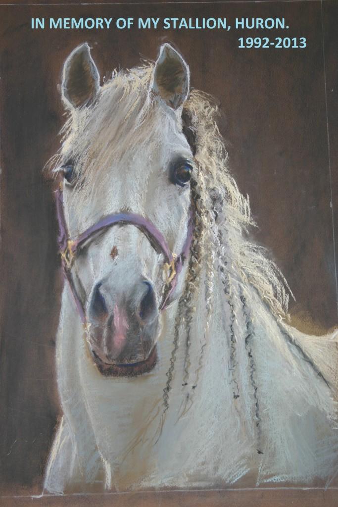 Huron horse portrait