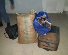 A joint police operation dealt a massive blow to the drug trade - Northern Cape