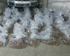 Cape Town police arrest suspects for possession of illegal abalone
