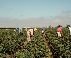 Farm owner arrested for allowing crossing of illegal immigrants as well as stolen vehicles