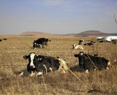 Farmer found dead near Vrede in Free State