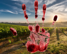 The body of 46-year-old man was found on his farm with strangulation marks on the neck - KwaZulu-Natal