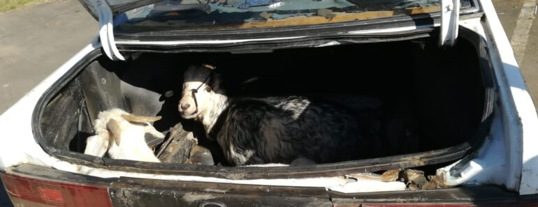 Two suspects aged 32 and 35 were placed under arrest for stock theft - KwaZulu-Natal