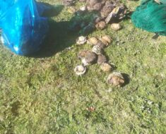 Two arrested for alleged abalone poaching in St Francis Bay - Eastern Cape
