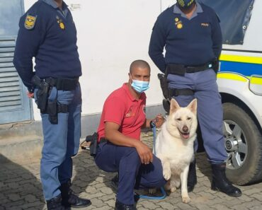 Intensive search by Tsitsikama K9 Unit leads to safe return of 2-year-old missing girl in Knysna - Western Cape