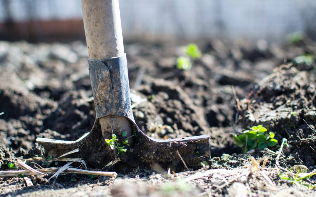 10+ Gardening Tips That Will Help Save You Money