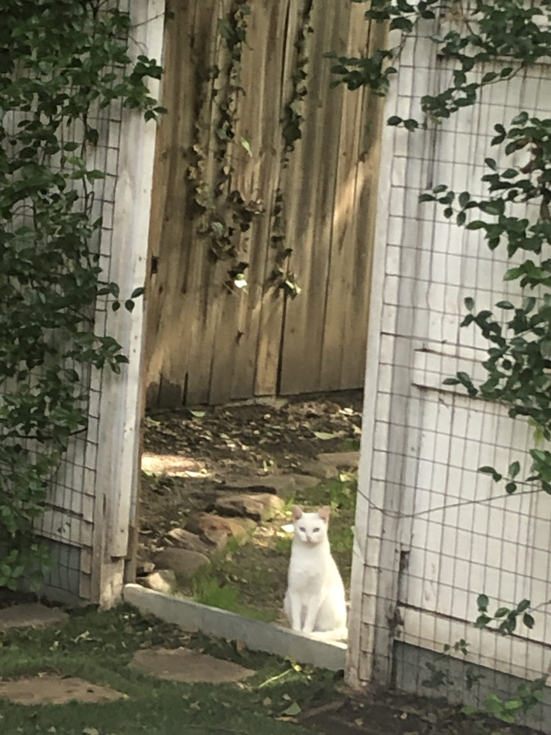 The Cate at the Gate