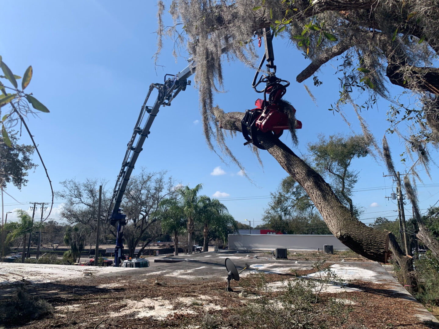 commercial-tree-removal-tampa-bay-fl