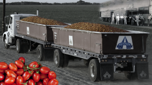 Header Antonini Fruit Express