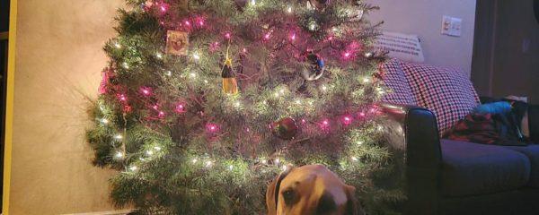 Louie Loves Christmas!