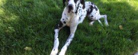 Kiko – Another Successful Private Adoption!