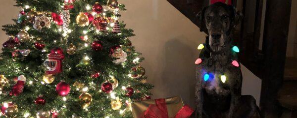 Blake Celebrates Christmas In Style