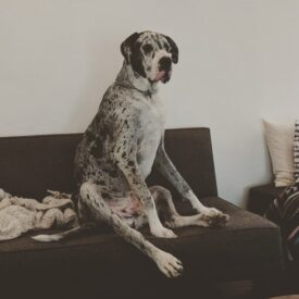 Woodrow – Adopted!