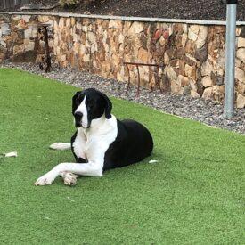 Leo – Private Adoption