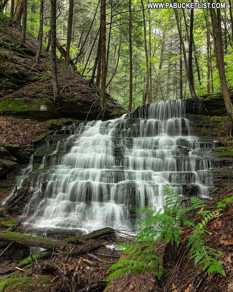 Falls on Bear Run in Tioga County PA