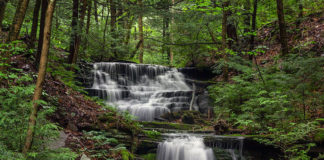 Waterfalls along Bear Run in the Tioga State Forest near Colton Point State Park