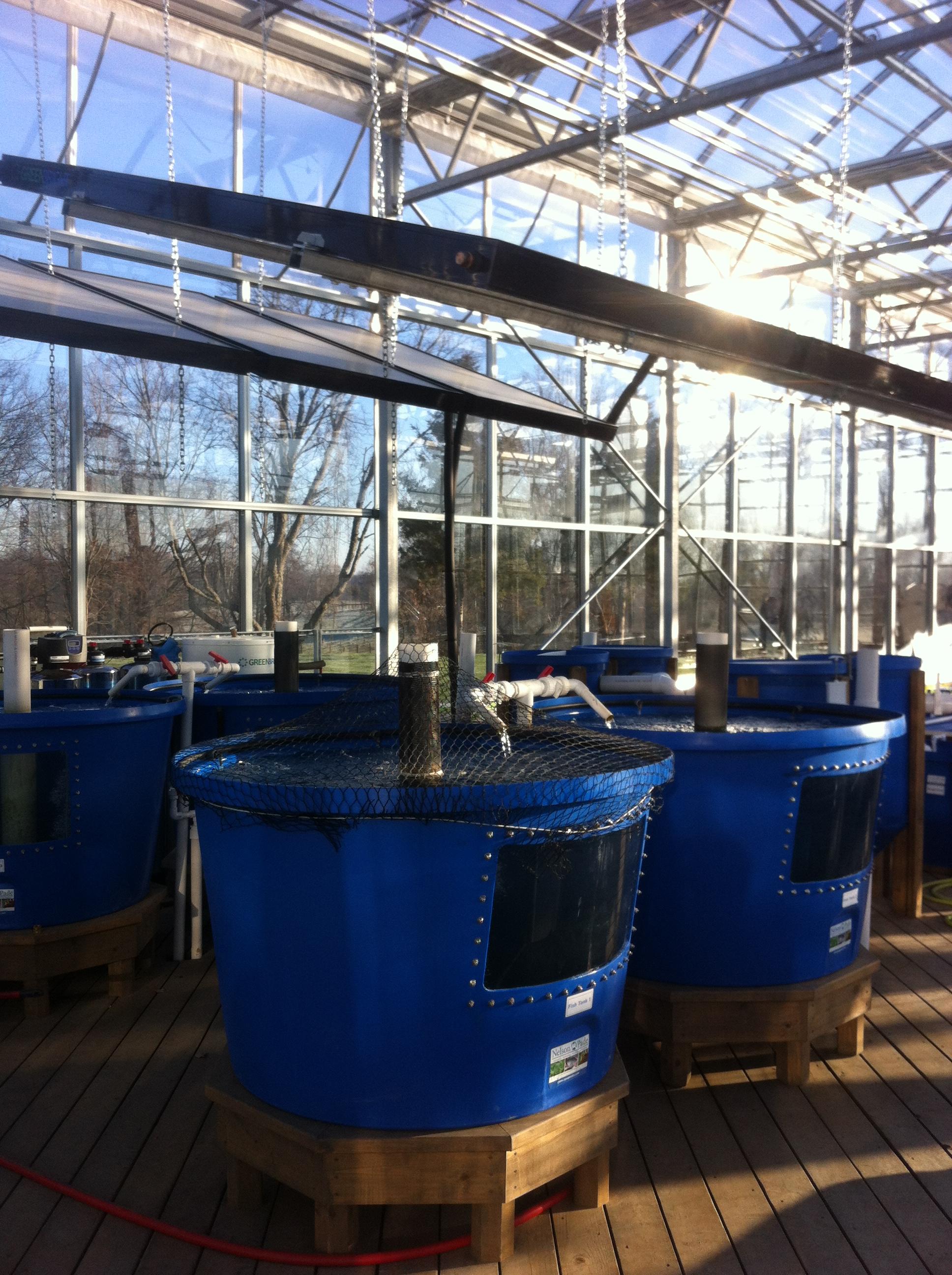 Aquaponics at Robin Hills Farm