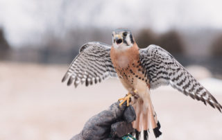 Visit with Local Birds of Prey at Robin Hills Farm