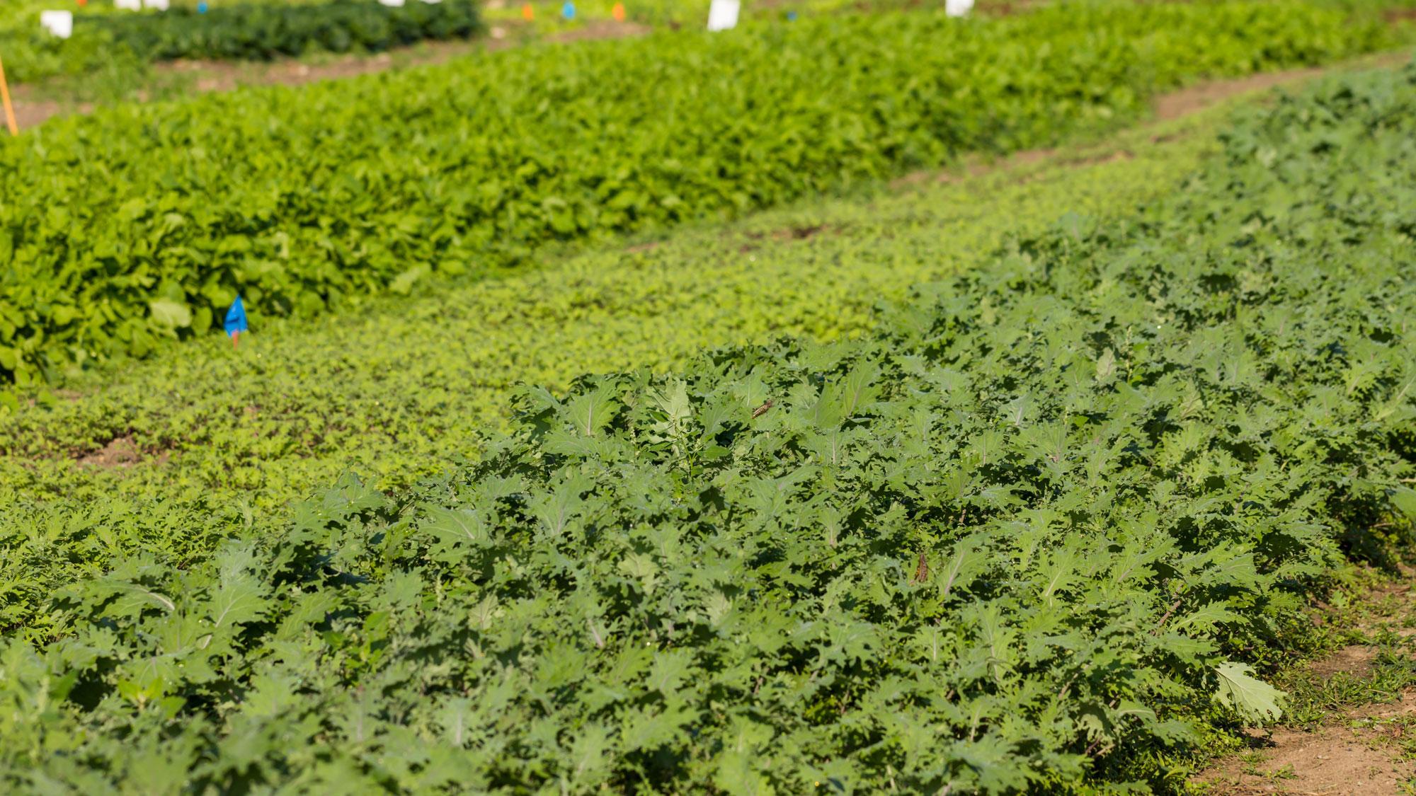 The Garden at Robin Hills Farm
