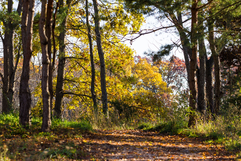 Nature Trails at Robin Hills Farm