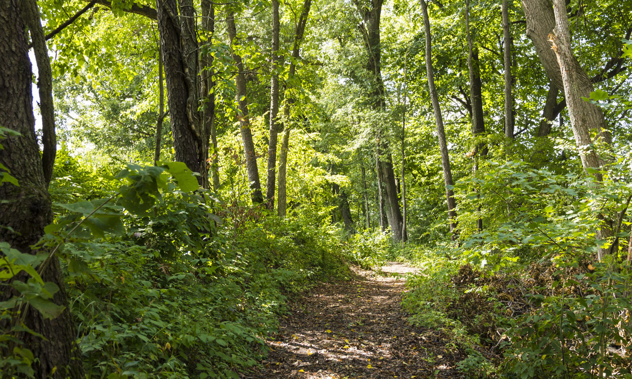 Nature Trails at Robin Hills Farm